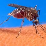 Cum putem scapa de tantari fara insecticide