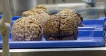 creiere