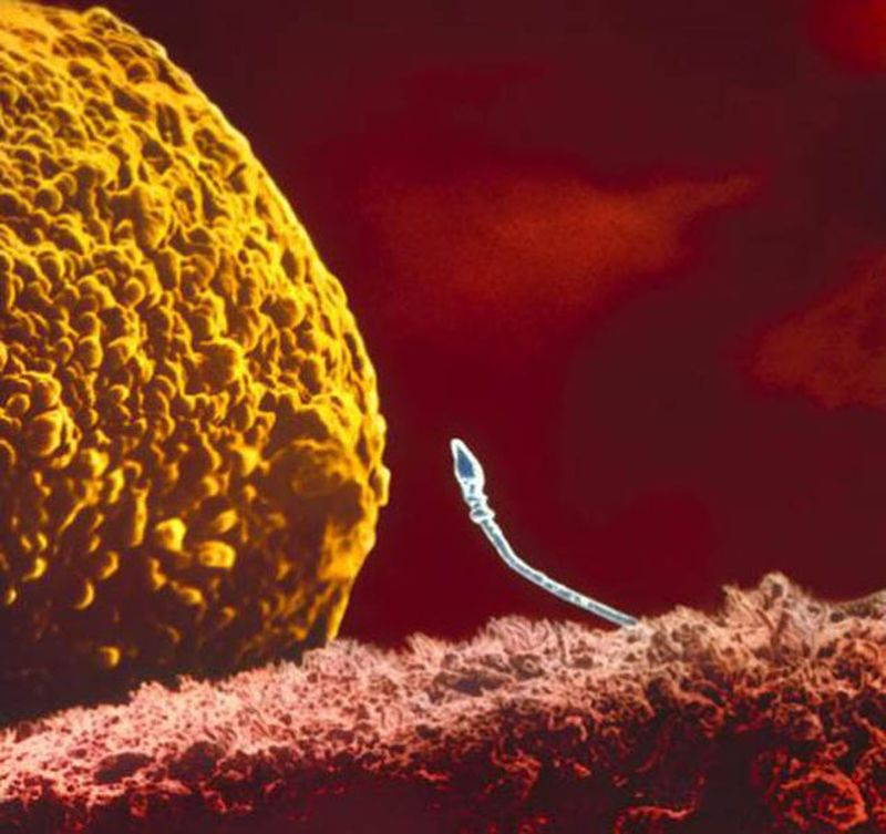 celula ou