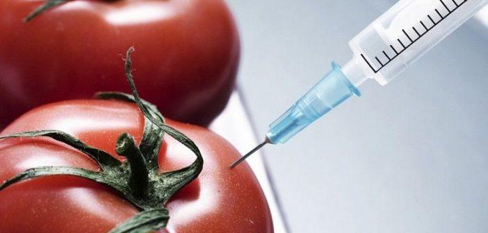 rosii modificate genetic